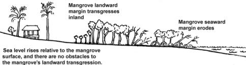 mangrove graph